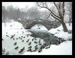 Central Park - Presidents Day Blizzard - February 17 2003